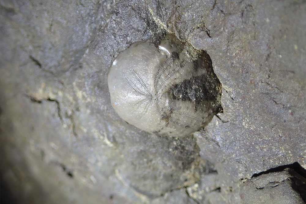 fossil en spéléologie annecy